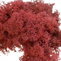 Koristesammal käsitöihin Punainen luonnollinen sammal värillinen pussissa 40g