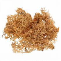 Koristesammal käsitöihin Oranssin värinen luonnollinen sammal säilöttynä 40g