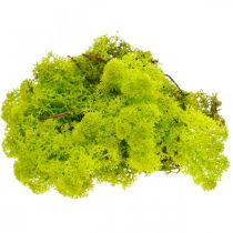 Deco Moss vaaleanvihreä Islanninsammal säilötty käsityömateriaali 400g