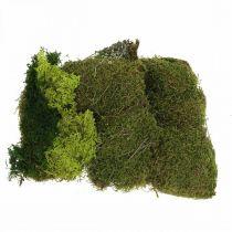 Koristesammal käsitöihin Mix Vihreä, vaaleanvihreä luonnon sammal 100g