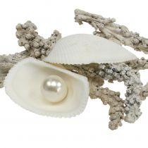Shell Mix Pearl ja Wood White 200g