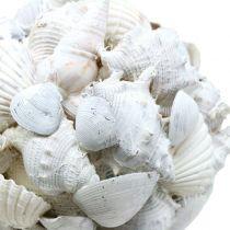 Kuoripallo valkoinen Ø10cm