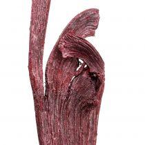 Natraj antler -puuseos punainen, valkoinen pesty 10kpl