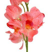 Orkidea Mokara Lohi 50cm 6kpl