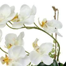 Orkidea Phalaenopsis ripustaa H26cm-kerma