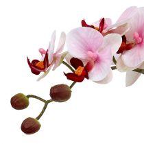 Orkidea vaaleanpunainen keraamisessa ruukussa 31cm