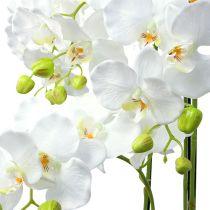 Orkidea valkoinen ja maapallo 110cm