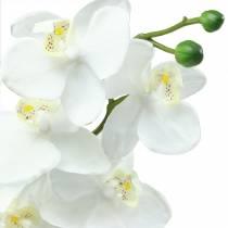 Orkidea valkoinen 77cm
