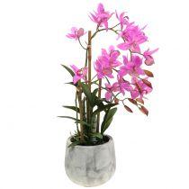 Orkidea violetissa ruukussa H55cm