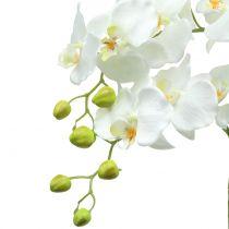 Orkidea valkoinen maapallolla 65cm