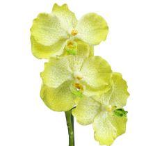 Orkidea juurilla vaaleanvihreä L43cm
