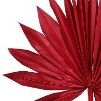 Palmspear Sun mini punainen 50kpl