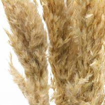 Kuiva Deco Pampas Grass Kuivattu Valkaistu 70-75cm 6stems
