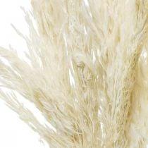 Pampas Grass Kuivattu Valkaistu Kuiva Deco 65-75cm 6kpl kimpussa