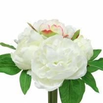 Pioni nippu valkoinen / vaaleanpunainen 27cm 6kpl