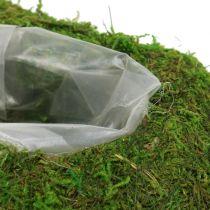 Kasvi Heart Moss 23cm x 19cm