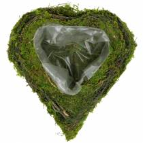Kasvien sydämen viiniköynnös, sammal 22cm x 20cm K7cm