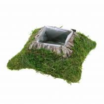 Kasvityyny Sammal, kuori 20cm × 20cm