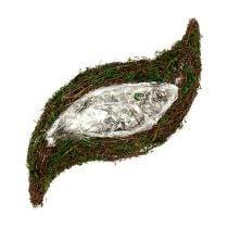 Istutin Viiniköynnös, sammal 45cm x 18cm H7cm