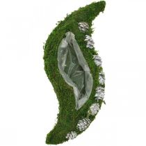 Istutusastia Sammalta ja käpyjä Aallonvihreä, Valkoinen pesty 41×15cm
