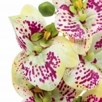 Keinotekoinen orkideahaara Phaelaenopsis Green Pink H49cm