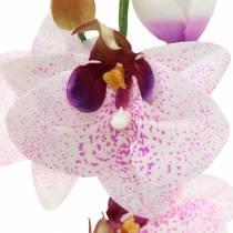 Keinotekoinen orkidea Phaleanopsis Valkoinen, Violetti 43cm