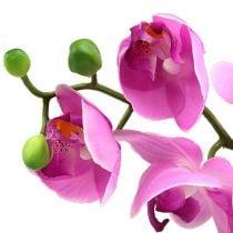 Orkidea Phalaenopsis vaaleanpunainen 77cm