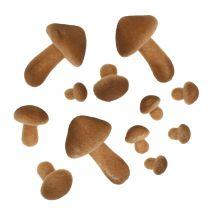 Sienet vaaleanruskea sekoitus 2cm - 8cm 12kpl