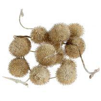 Sycamore-hedelmät pesty valkoisena 250g