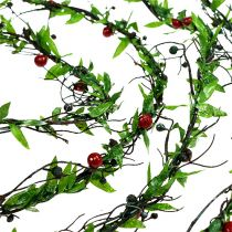Viiniköynnösten siemenet marjoilla 3m