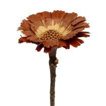 Repens ruusukkeen valo 8-9cm 25kpl