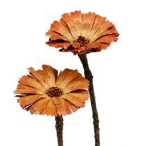 Repens ruusukkeet luonto 6-7cm 50kpl
