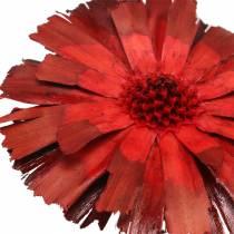 Repens Rosette Punainen 8cm - 9cm 25kpl 25kpl
