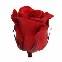 Infinity ruusut iso Ø5.5-6cm punainen 6kpl