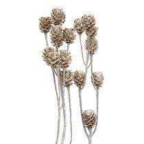 Salignum valkoinen pesty 25kpl