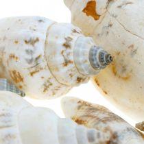 Koristeelliset etanankuoret tyhjässä raffiaverkossa merietanat 400g