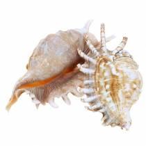 Merietana tuhatjalkainen luonnollinen 11-15cm 10kpl