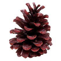 Mustat käpytikkaat Punainen himmeä 5-7cm 1kg