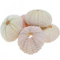 Merellinen koristelu merisiili asunto vaaleanpunainen, valkoinen hajonta koristelu 55kpl