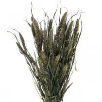 Kuivatut kukat Setaria Anthracite Nature Bristle Hirssi Nippu 100g