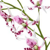 Spider-orkideat Brassia Pink-White 108cm 3kpl