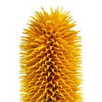 Laidunkarstaohdake Teräväkärkiset Luonnonvarret Keltainen 1kg