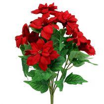 Kimppu joulutähtiä, punainen L47cm