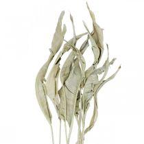 Strelitzia lehdet kuivattu vihreä himmeä 45-80cm 10kpl 10kpl