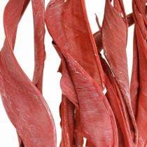 Strelitzia lehdet punainen himmeä kuiva floristinen 45-80cm 10kpl 10kpl