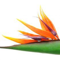 Strelitzia paratiisilinnun kukka 95cm