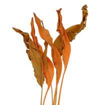 Strelitzia jättää oranssin 120cm 20kpl