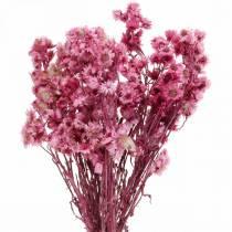 Kuivatut kukat vaaleanpunainen Kuivatut kukat kukkakimppu vaaleanpunainen H21cm