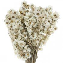 Olkikukat Kuivatut kukat kukkakimppu valkoinen pieni 15g
