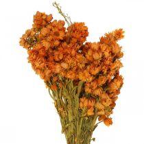 Olkikukat Kuivatut kukat oranssi pieni 15g
